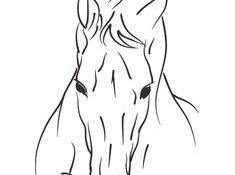Charmant Tête De Cheval De Face Dessin 69 Pour Coloriage Pages with Tête De Cheval De Face Dessin