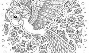 Cool Coloriage Oiseau Adulte 96 sur Coloriage Pages for Coloriage Oiseau Adulte