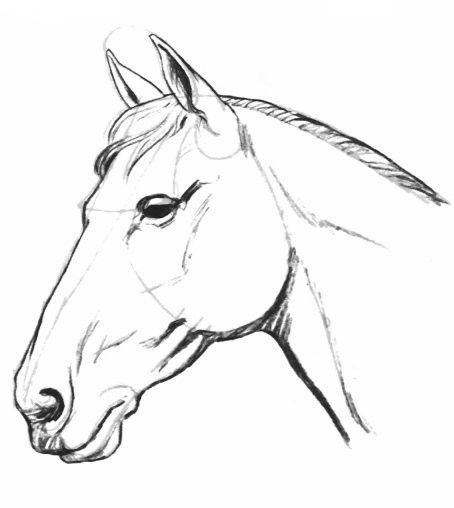 Cool Dessin Facile A Faire De Cheval 44 Dans Coloriage idée for Dessin Facile A Faire De Cheval