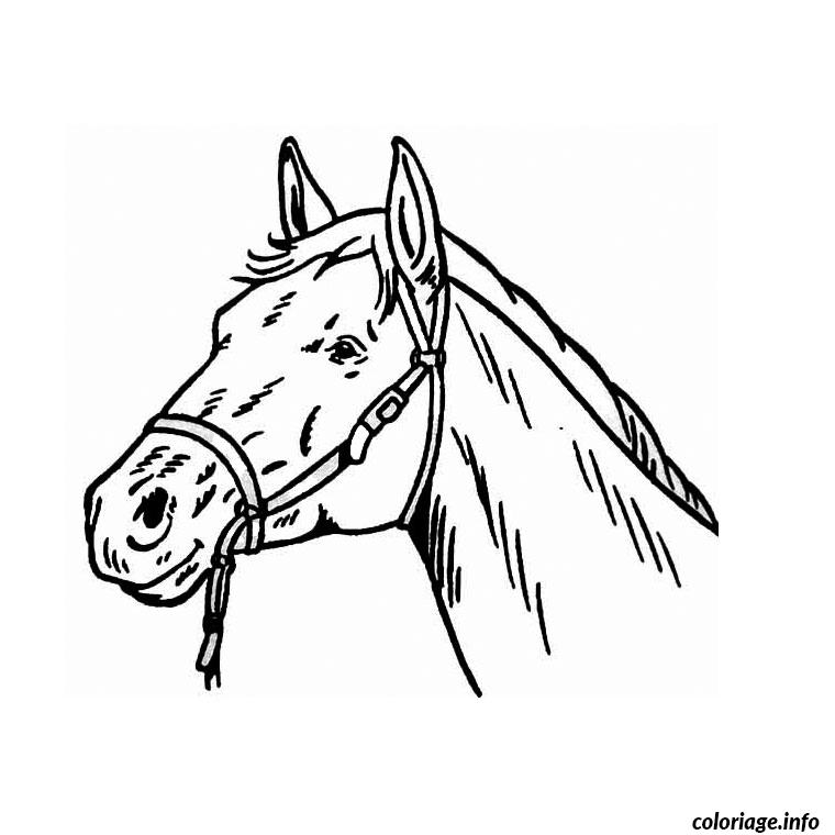 Cool Tête De Cheval De Face Dessin 90 Dans Coloriage Pages by Tête De Cheval De Face Dessin