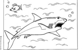 Génial Dessin Requin Blanc 18 sur Coloriage Pages by Dessin Requin Blanc