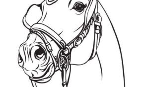 Haut Cheval Qui Saute A Colorier 79 Dans Coloriage Pages by Cheval Qui Saute A Colorier