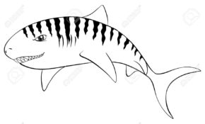 Mignonne Coloriage Requin Tigre 44 Pour Coloriage Books for Coloriage Requin Tigre